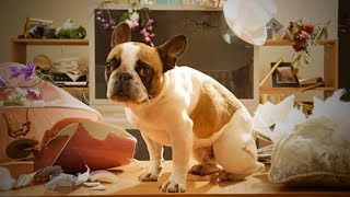 Funny Guilty Dogs 🐶😂 Funny Dogs Reactions When Caught Guilty  (Full) [Funny Pets]