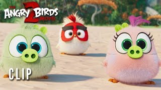 THE ANGRY BIRDS MOVIE 2 Clip - Hatchling Eggs
