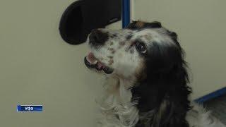 В поиске наркотиков и взрывчатки: как в Уфе собаки Холли и Жуля спасают людей