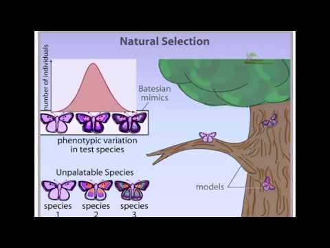 Cloning S Affect On Natural Selection