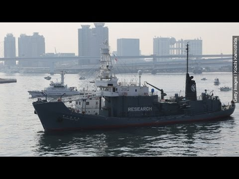 The Future Of Japanese Whaling: Heritage Vs. Conservation
