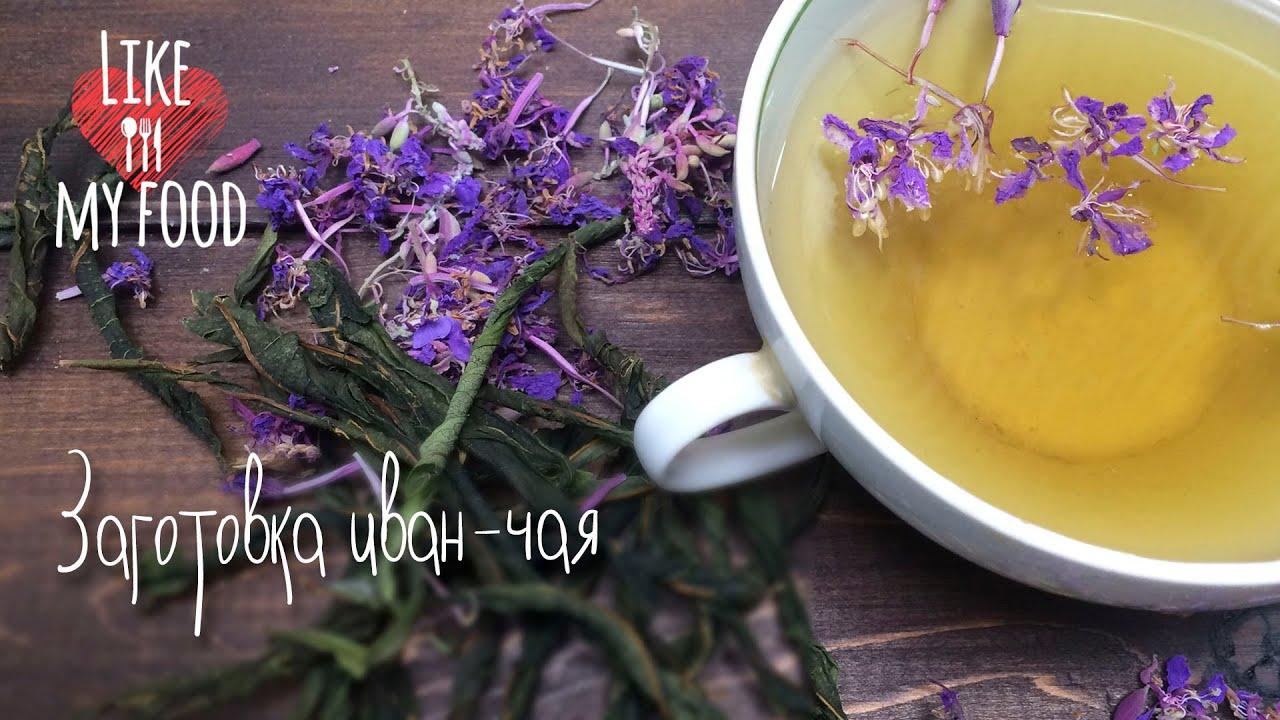 Как правильно сделать иван чай из собранных листьев