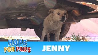 Hope For Paws: Saving Jenny - a homeless Chihuahua who just wanted to be loved.  Please share.