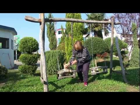 Swinging yorkie dog