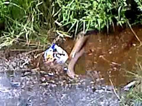anaconda sibu