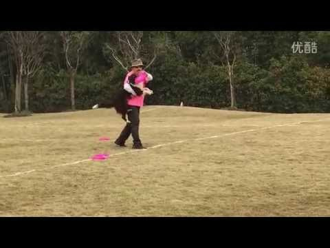 Border Collie Frisbee Freestyle - USDDN Sub Division Shanghai