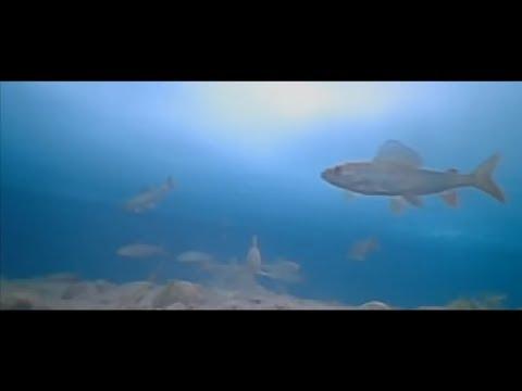 рыбалка на балыктыг хем