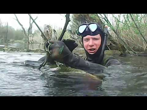 подводное видео осетр