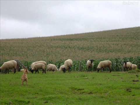 Cintia Moreira -- Cem Ovelhas. video