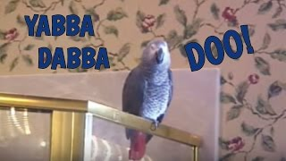 "How Einstein the Parrot Learns New Words - ""Yabba Dabba Do!"""