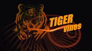 "download lagu Tiger Vines Present ""aao Bachpn Yaad Karin"" gratis"