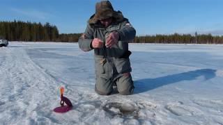 сегозеро рыбалка в мае