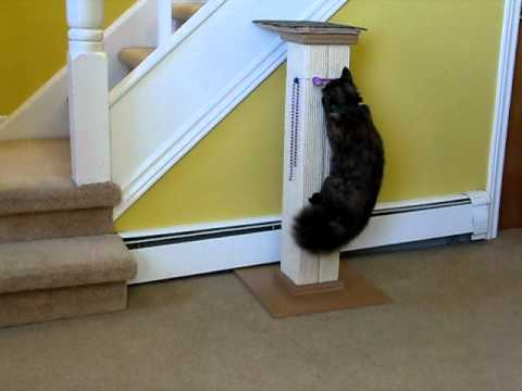 Ultimate Cat Scratching Post.