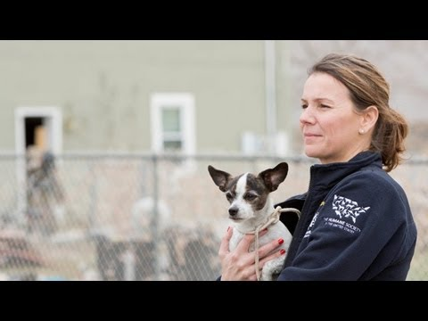 The HSUS's Animal Rescue Team Helping Animals and Families