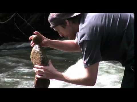 Creando esculturas con rocas dentro de un río