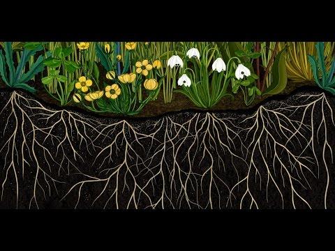 "AMKK presents: Botanical animation ""Story of Flowers"" full ver."