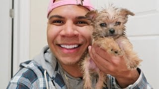 SURPRISED HER WITH A PUPPY!!