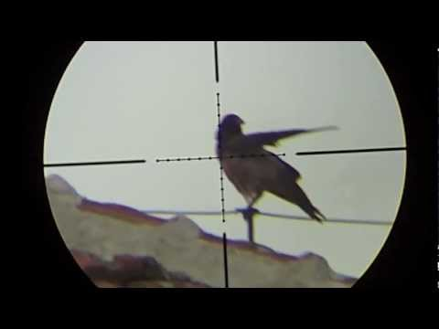Air rifle hunting #4 Shooting Crows - pest control