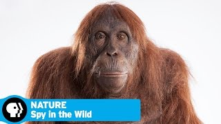 SPY IN THE WILD on NATURE | Official Trailer | PBS