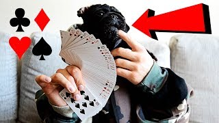 DOG WITH HANDS PRANK!!!