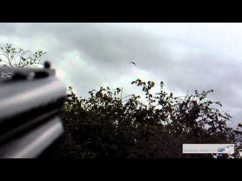 Beretta 686 silver pigeon sporter guncam shotgun walk about shooting