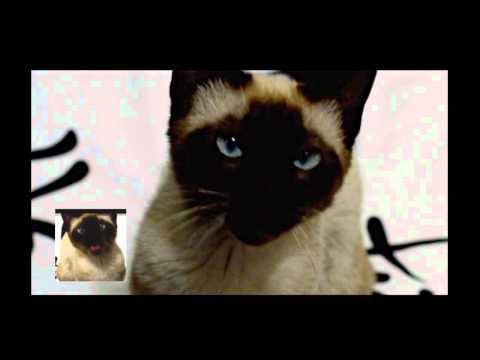 Game of Thrones opening sung by a cat [ORIGINAL UPLOAD]