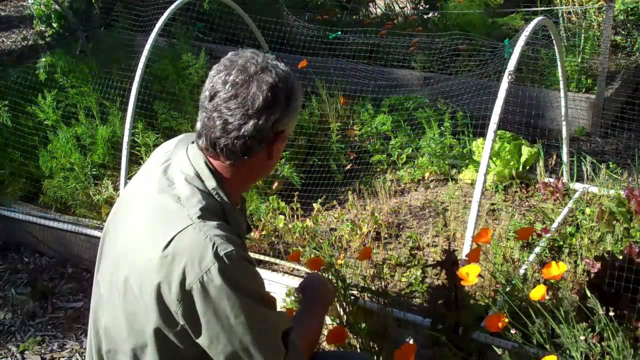 Hoop Frame For Bird Netting Youtube