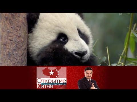 Открытие Китая. Панды. Выпуск от 17.04.2016