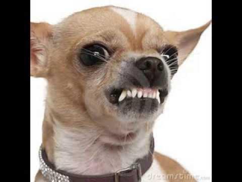 El Perro Boby