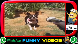 Most Funny Videos Indian Ever Seen in India | 2017 Whatsapp Funny Trending