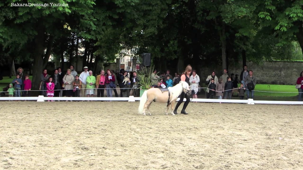 Rencontres equestres luneville 2016