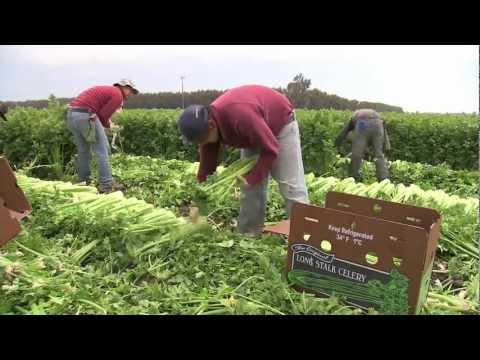 United Farm Workers celebrates 50th anniversary