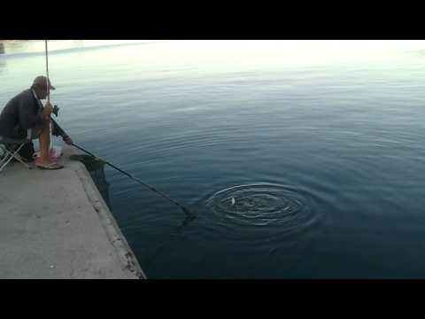 удилище fishing roi blade 500 5m