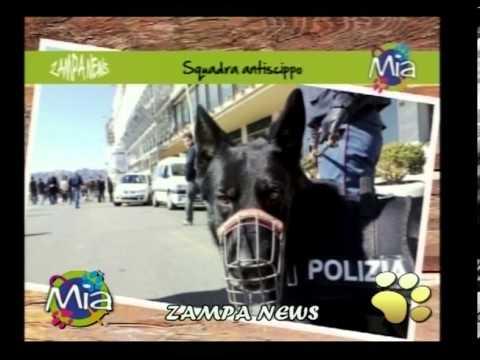 Zampa News Notizie curiose sugli animali di MIA Mondo Intorno agli Animali