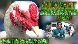 Lalukhet Birds Hen & Rooster For Sale Sunday Market 29 -7 -2018 (Jamshed Asmi Informative Channel)