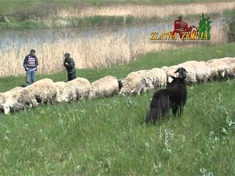Zeljko Zeljkovic iz Udruzenja odgajivaca koza i ovaca