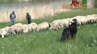 Zeljko Zeljkovic iz Udruzenja odgajivaca koza i ovaca 05:07