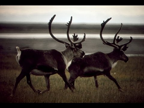 Oil & Politics in Alaska: Money, History, Discovery, Drilling, Economy (1998)