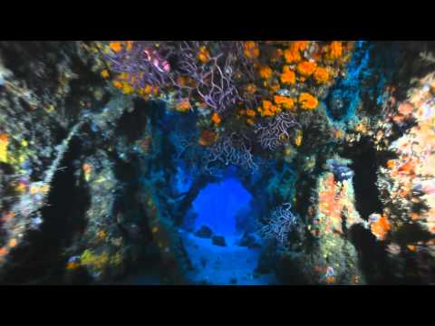 "One of 3 spectacular wreck dives in Palm Beach where the Goliath Groupers aggregate once a year. This just began now( late August) and will continue till around late October/early November. Best time to plan this trip is RIGHT NOW,  for as soon as you can make it :-)  Visit www.sfdj.com for all of the dive boat and Dive Resort specials ( As low as 99$ per night at the Hilton on the Beach at Singer Island, and "" you don't need a rental car"" !)...."