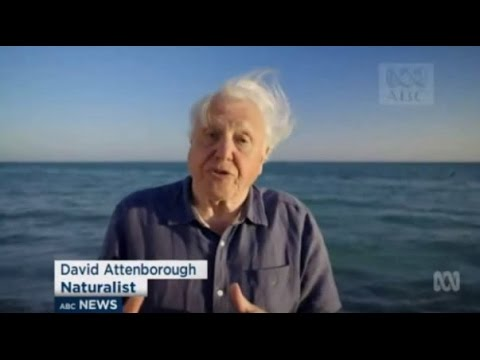 'Grave danger': David Attenborough warns Climate Change threatens Great Barrier Reef