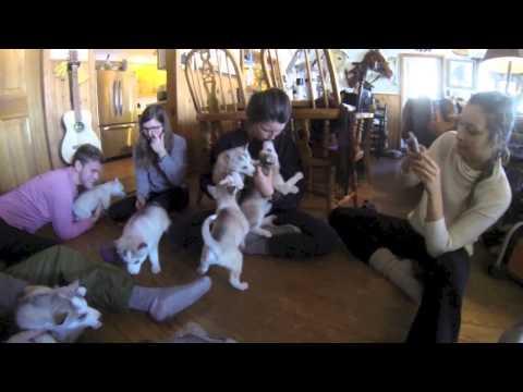 Amazing Showdown [ORIGINAL] - #Puppies 2 of 10