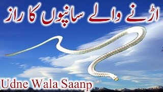 Urnay Wale Saanp Ka Raaz Flying Snake Urdu Hindi Udne Wala Saanp
