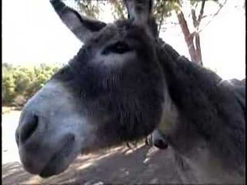 Donkey Mating Videos   Donkey Mating Video Codes   Donkey Mating Vid ...