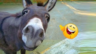 Funniest 😂 Donkey 🐴 Video Compilation Ever! |2019