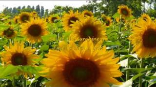 Watch Anne Murray You Are My Sunshine video