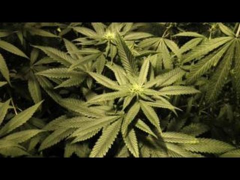 The debate over legalizing recreational marijuana