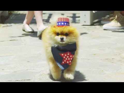 Pet Safety - 4th of July Pet Party and Summer Tips: by Petco