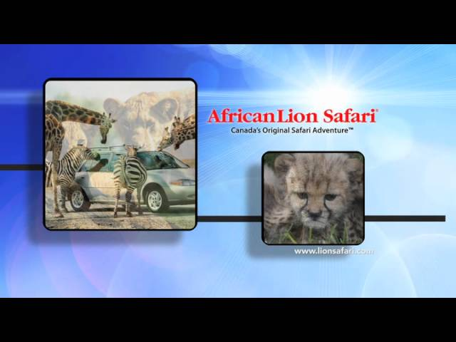 African Lion Safari - Summer 2012 TV