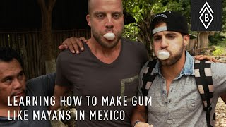 Learning How To Make Gum Like Mayans In Mexico