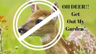 The easiest way to keep deer away from your garden and fruit trees!